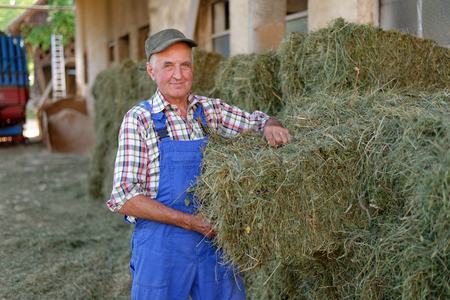 hay bale: Organic farmer stack bales for feeding livestock. Model is a real farm worker! Stock Photo