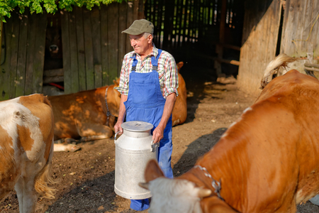 Farmer is working on the organic farm with dairy cows and holding big milk container pot. Model is a real farm worker! photo