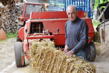 50 to 55 years: Organic farmer makingstack bales for feeding livestock. Model is a real farm worker!