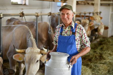 농부는 젖소와 유기 농장에서 일하고 큰 우유 용기 냄비를 들고있다. 모델은 실제 농장 노동자입니다!