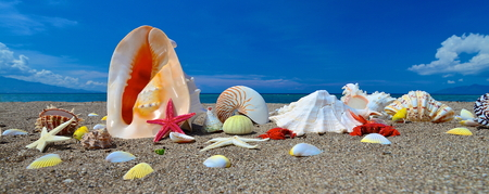 Starfish and seashells on the tropical beach with blue sky Stock Photo