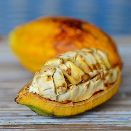 cocoa fruit: Cocoa fruit
