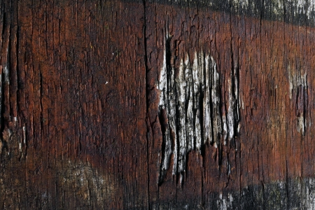 old wood with nails and rust photo