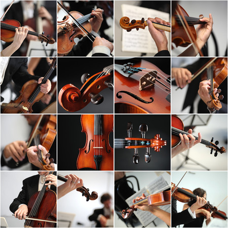 violines: músico toca el violín en la orquesta