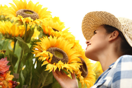 woman touching sunflowers, summer concept Stock Photo