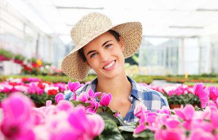 cultivation: smiling woman with flowers, in greenhouse, cyclamen plants