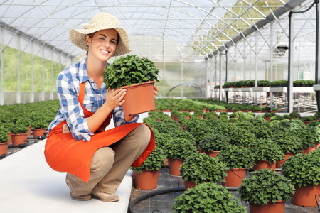 smiling woman in a greenhouse: smiling woman in greenhouse, with a potted plant in hands