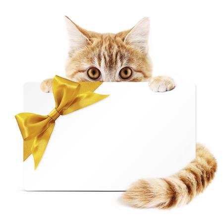 tarjeta de regalo de gato con cinta de oro arco aislado en fondo blanco Foto de archivo