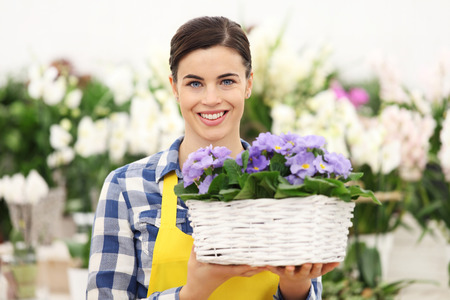 flowers garden: florist woman smiling with white wicker basket flowers of purple primroses Stock Photo