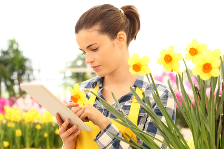 flowers garden: woman using tablet computer in flowers garden, narcissus closeup Stock Photo