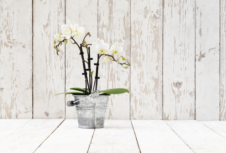 single shelf: white orchid in metal pot, on white wooden planks
