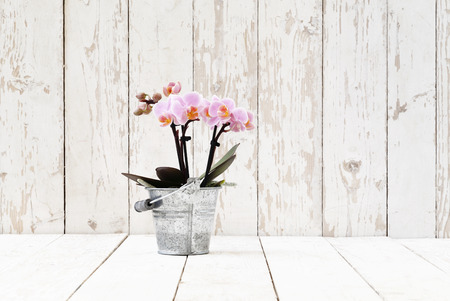 single shelf: pink orchid in metal pot, isolated on white wooden planks Stock Photo