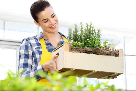 oregano plant: smiling woman holding a crate of aromatic herbs Stock Photo