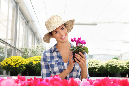smiling woman in a greenhouse: smiling woman in greenhouse with cyclamen plants Stock Photo