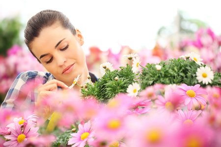 floriculture: springtime, woman touches the petal of daisy in garden daisies flowers Stock Photo