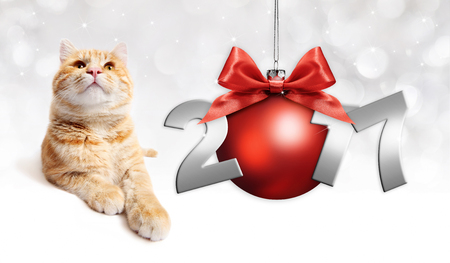 pet store advertising: ginger cat and red christmas ball with red satin ribbon bow and 2017 silver text