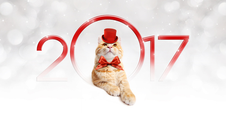 pet store advertising: Text 2017 with Christmas magic fun cat
