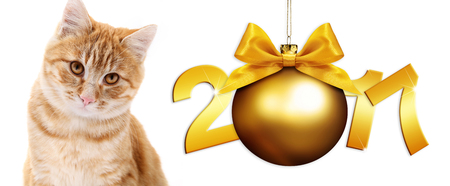 pet store advertising: ginger cat and golden christmas ball with gold satin ribbon bow and gold 2017 text Stock Photo