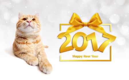pet store advertising: ginger cat and golden happy new year 2017 text with golden ribbon bow