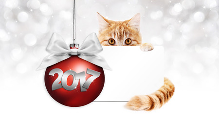 pet store advertising: 2017 text ginger cat with card and red christmas ball