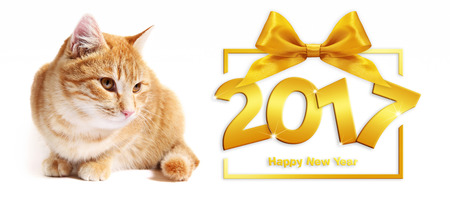 2017 golden happy new year text and ginger cat on white