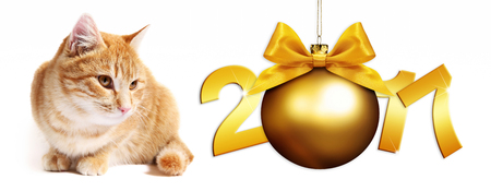 pet store advertising: 2017 text ginger cat with golden christmas ball whit ribbon bow on white