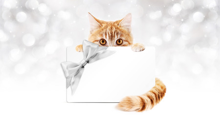 pet store advertising: ginger cat with gift card and silver ribbon bow on lights