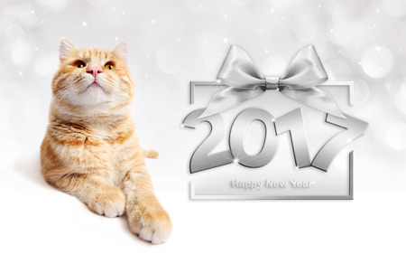 ginger cat and silver happy new year 2017 text with bow Stock Photo