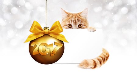 pet store advertising: 2017 text ginger cat with card and golden christmas ball with  bow Stock Photo