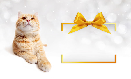frame  box: ginger cat and golden gift box frame with  bow