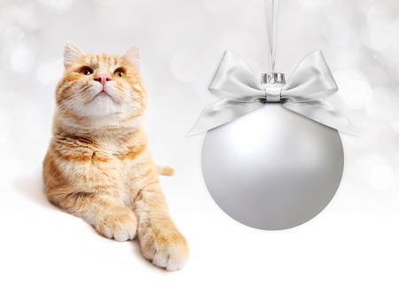 pet store advertising: ginger cat with silver christmas ball whit  bow in white background Stock Photo
