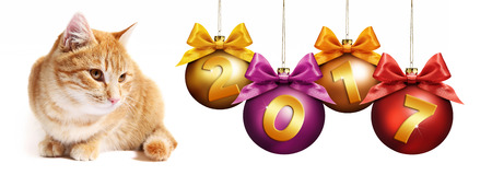 pet store advertising: 2017 text ginger cat with christmas balls with ribbon bow Stock Photo