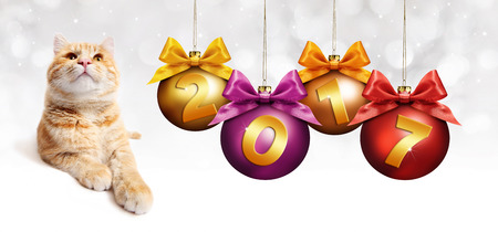 2017 text ginger cat with christmas balls