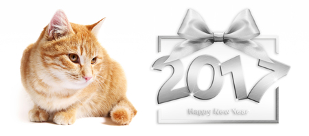 2017 silver happy new year text and ginger cat in white background