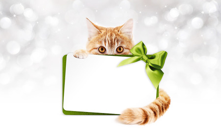 ginger cat with gift card and green ribbon bow on lights Stock Photo