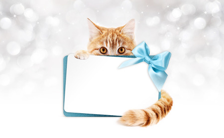 pet store advertising: ginger cat with gift card and blue ribbon bow on silver lights