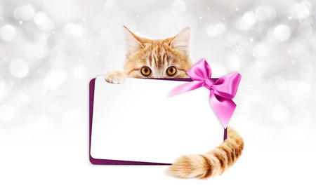 pet store advertising: ginger cat with gift card and purple ribbon bow on blurred lights