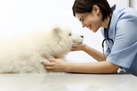 獣医師獣医医院の空白のテーブルの上に犬を調べることを笑ってください。