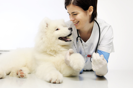 smiling veterinarian with pet dog in vet clinic, blood exam