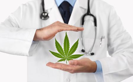 doctor hands with marijuana symbol medical concept.