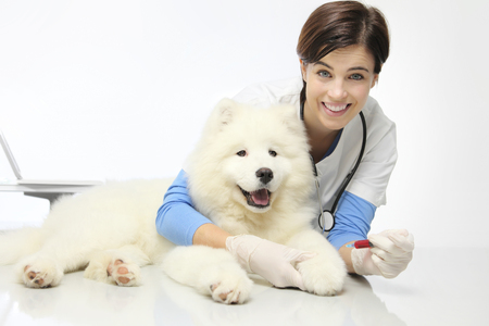 smiling veterinarian with dog in vet clinic, blood exam