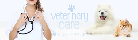 veterinary care concept. hands with stethoscope, dog and cat with graphic symbols isolated on white background. Stock Photo