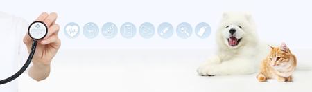 tierärztliches Versorgungskonzept. Hand mit Stethoskop, Hund und Katze mit den grafischen Symbolen lokalisiert auf weißem Hintergrund.