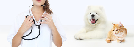veterinary care concept. veterinarian with stethoscope, dog and cat isolated on white blank background.