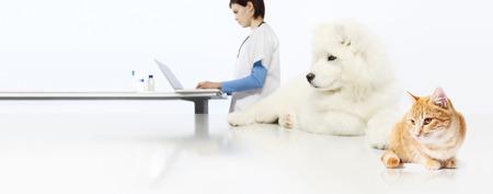 koncepcja weterynarza. lekarz weterynarii, pies i kot w biurze weterynarza na białym tle pusty transparent tło. Zdjęcie Seryjne