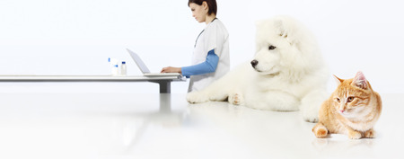 veterinarian concept. veterinary doctor, dog and cat in vet office isolated on white blank banner background.
