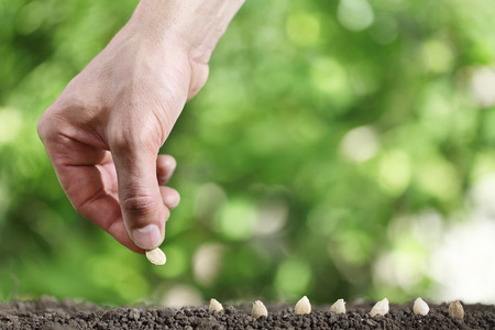 hand sowing seeds in the vegetable garden soil, close up on green background.