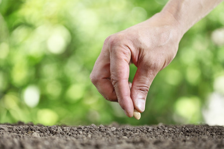hand sowing seeds in the vegetable garden soil close up on green background stock - Vegetable Garden Soil