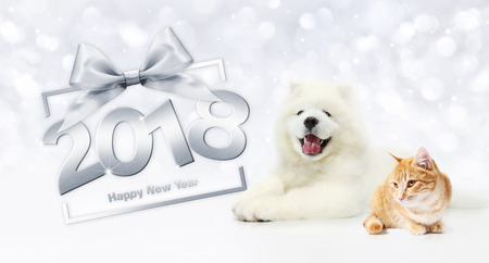 animals happy new year concept, cat and dog with gift box frame and silver satin ribbon bow. Stock Photo
