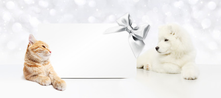 animals christmas theme, cat and dog with gift card and silver satin ribbon bow.